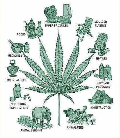 WHAT'S THE DIFFERENCE BETWEEN CANNABIS, HEMP AND MARIJUANA?