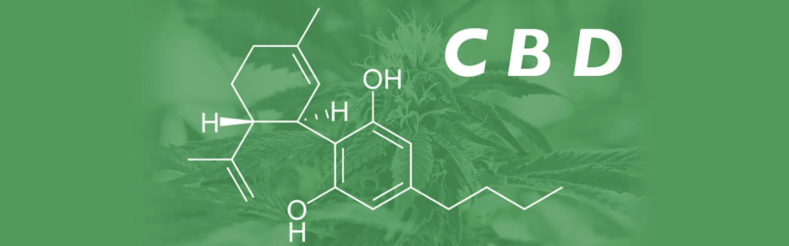 what is cbd oil used for