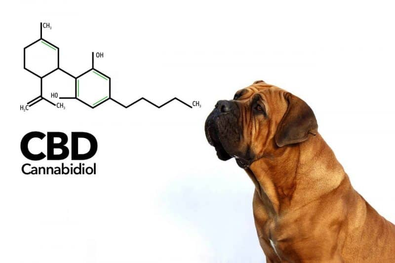 CBD For Dogs - CBD Oil For Dogs