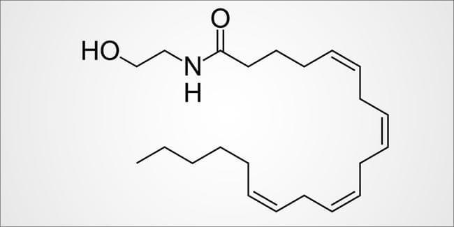 The bliss molecule