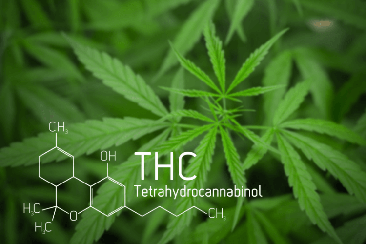 What is THC?