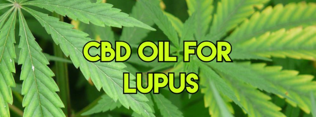 CBD for Lupus, CBD and Lupus, Lupus, Lupus Patients , CBD Cure for Lupus