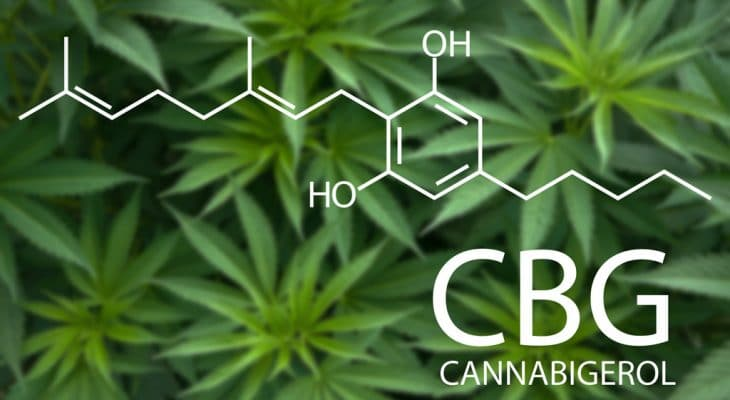 What is CBG , CBG , CBG Oil , Cannabis Plant
