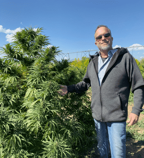 Colorado CBD Oil Hemp Plant