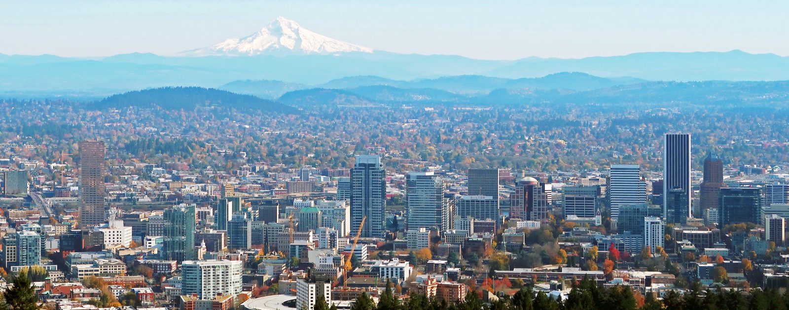 Where To Buy CBD in Portland